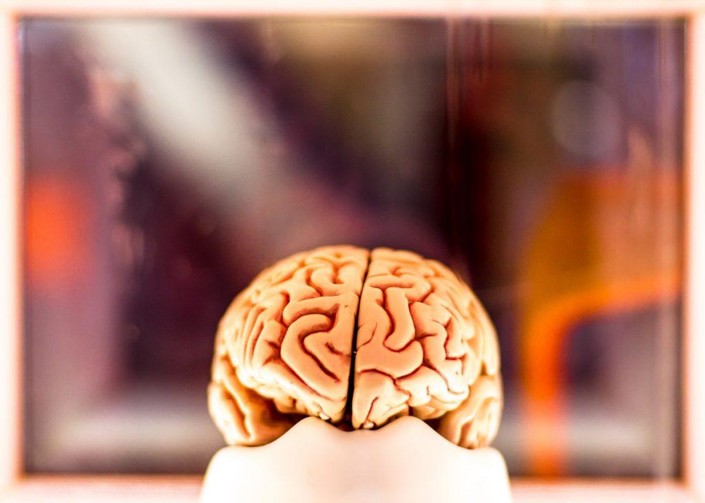 neuroplasticita_e_apprendimento